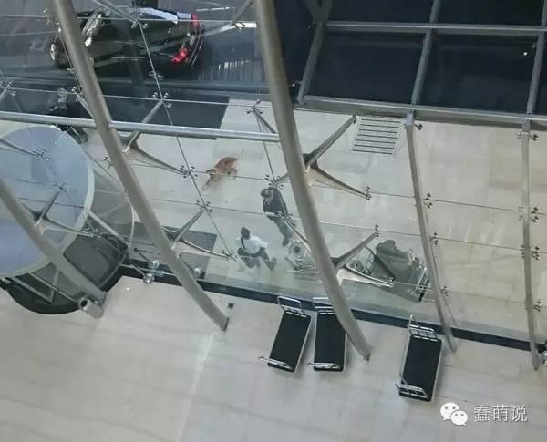 阿根廷流浪狗苦等德国空姐六个月,最终移民去了德国-蠢萌说