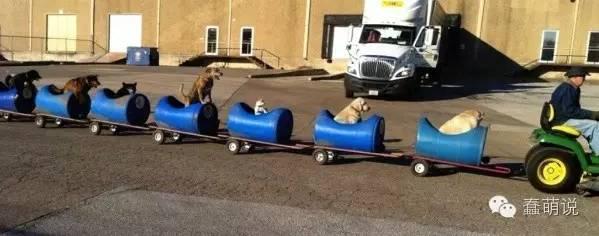 这脑洞简直了,老司机开着小火车带着狗狗去郊游!-蠢萌说