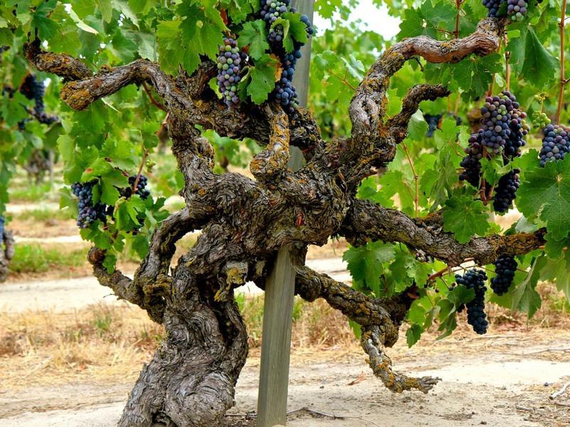 【奢侈品】关于布鲁奈罗葡萄酒,你不可不知的 10 件事