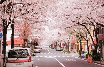 """""""解密""""去日本留学成为大势的原因"""
