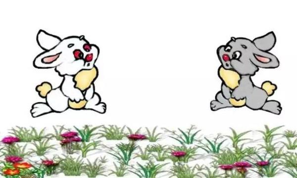 小白兔,白又白,蹦蹦跳跳真可爱
