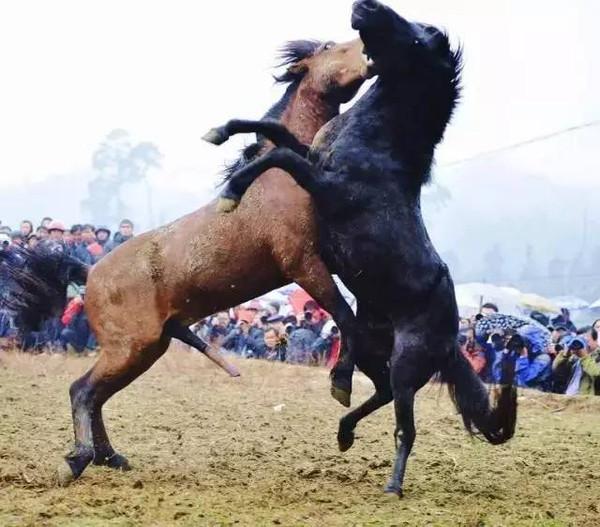 人与马的色情_养马人似乎一点也不在意自己的马是否会变成脱缰的野马,任其四处奔腾