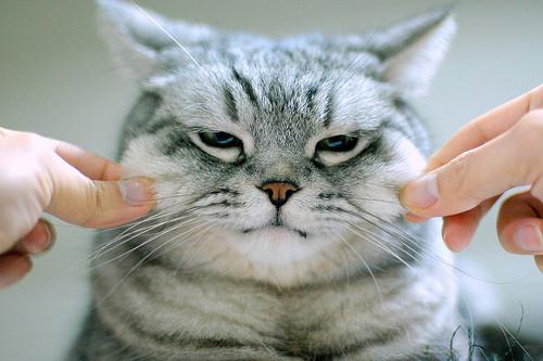 最胖的猫_世界上最胖的猫