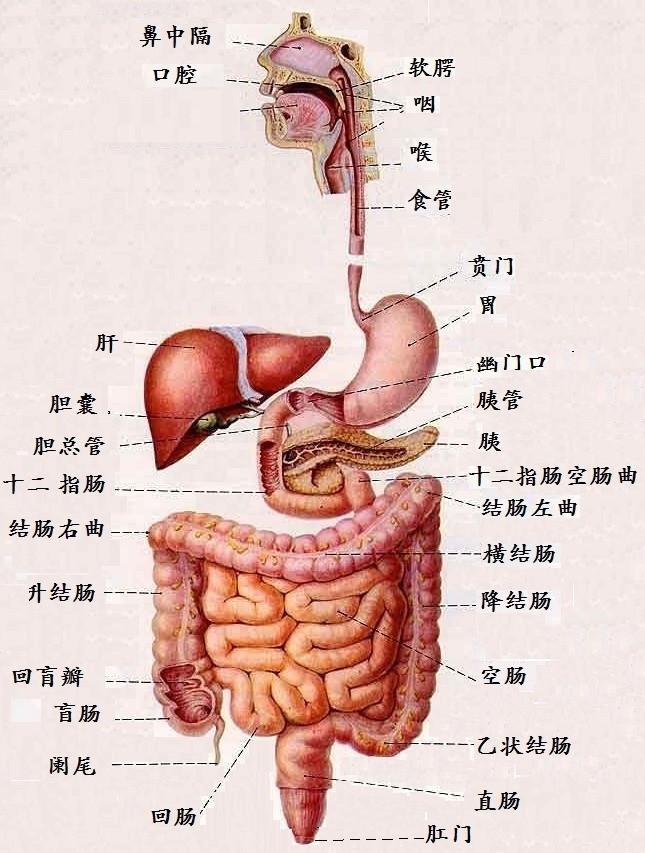 含人体器官的成语