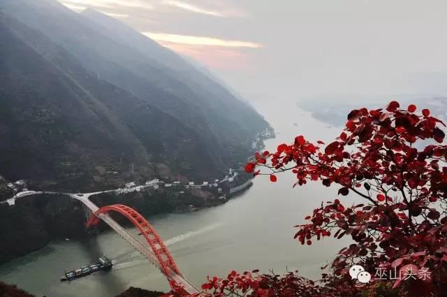 今年的第十届巫山国际红叶节将于11月18日开幕图片
