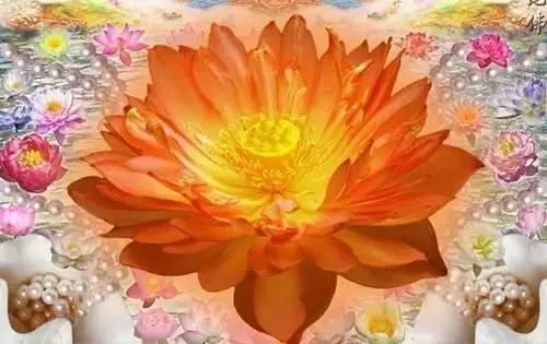 极乐世界七宝池里你的莲花在开吗 百福居士