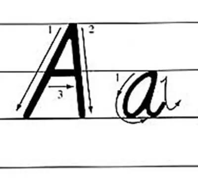 .   字母的笔顺   字母要按一定的笔划顺序书写,其书写笔