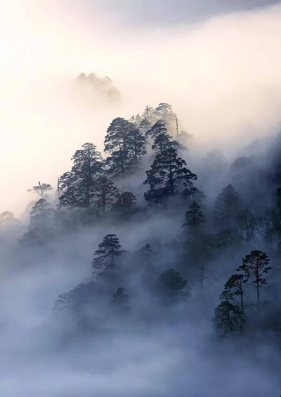 看了峨眉山的树,知道轻功有多重要!-搜狐旅游抢你妹攻略图片