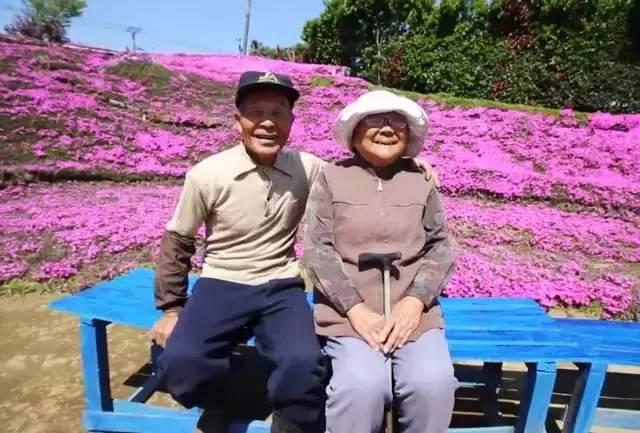 这是爱情,他为失明的妻子种出一片粉色花海
