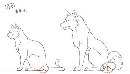 动漫设计绘画之猫狗绘画参考
