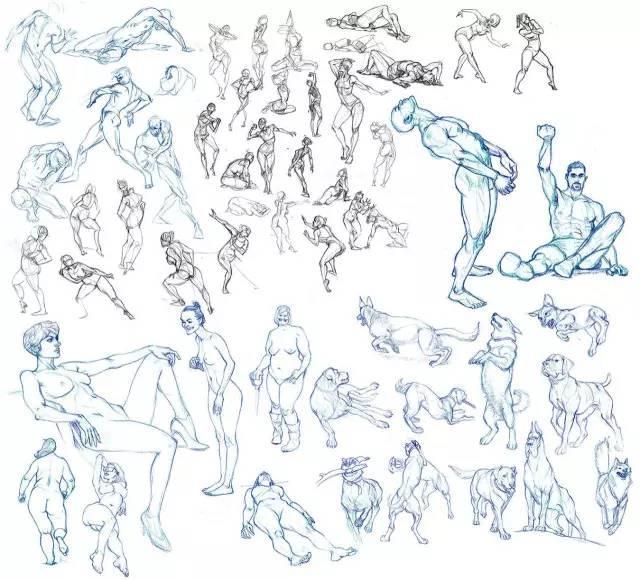 动漫动画培训学校|人体动态结构素材