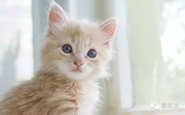 喜爱动物星座测试,来看看你有多喜欢小动物吧!-蠢萌说