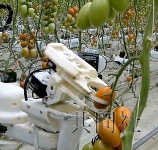 要做一款西红柿采摘机器人