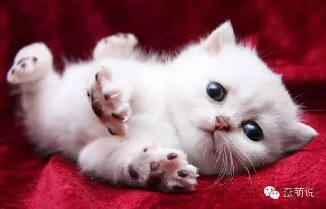 我们都爱小奶猫!太萌太可爱,即使你不爱猫也会被融化-蠢萌说
