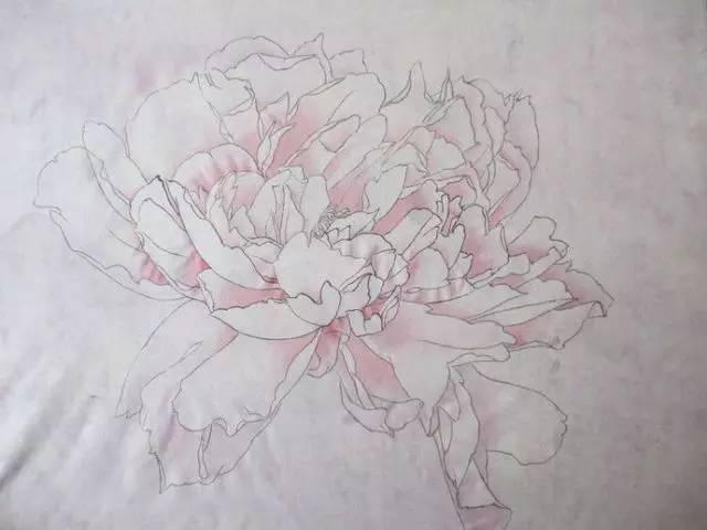 入门教程丨工笔画线描花卉画谱—牡丹篇