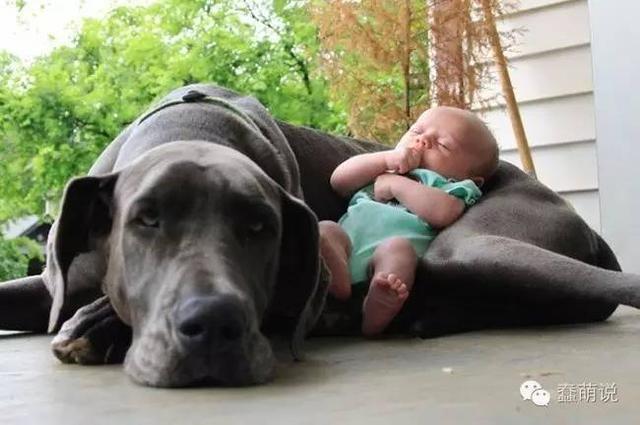 我需要一只狗,总能出现在正确的时间和正确的地点!-蠢萌说