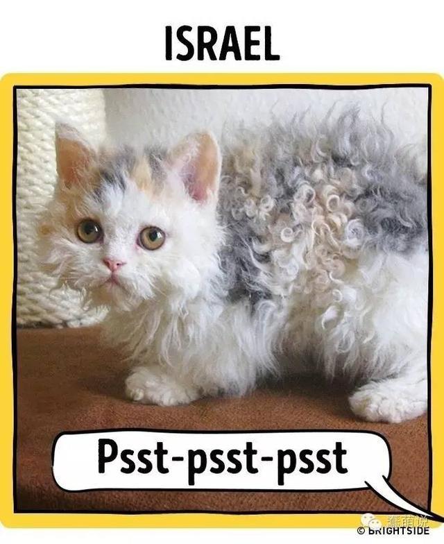 看看世界各地都是怎么称呼猫咪的?还是觉得中国的最好-蠢萌说