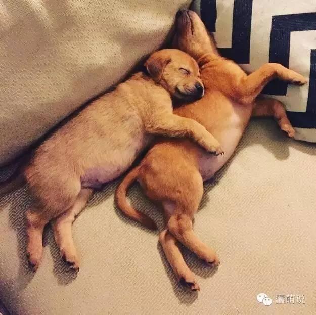 让这些可爱的小狗狗扫除你一天的坏情绪!-蠢萌说