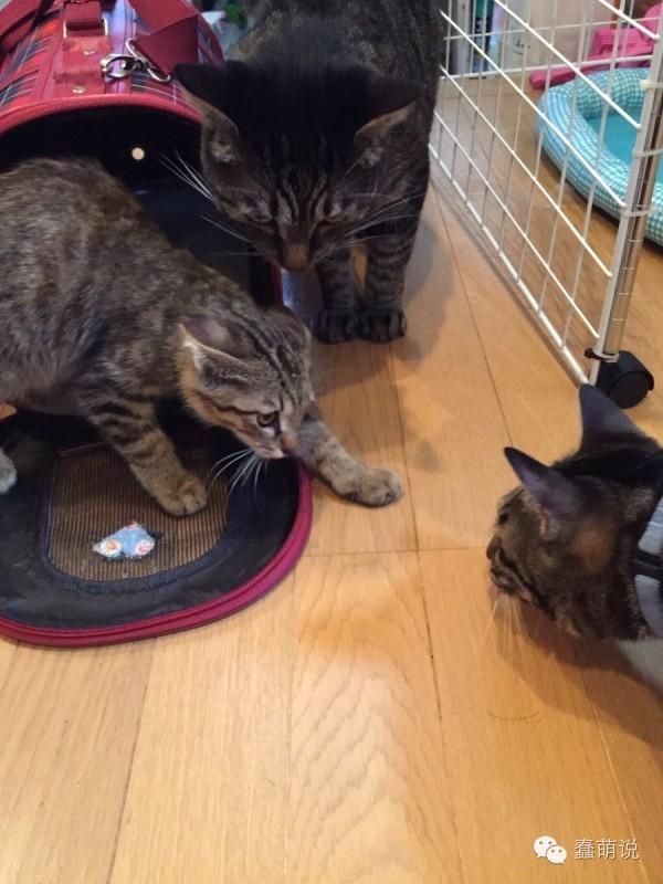 小猫刚到新家超紧张,但几天后猫奴竟然拍到超温馨照片!-蠢萌说