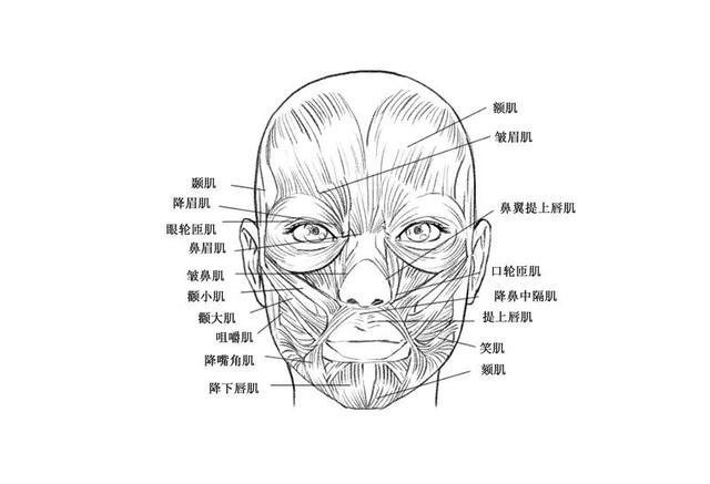 动漫绘画教程 | 如何画好人脸?