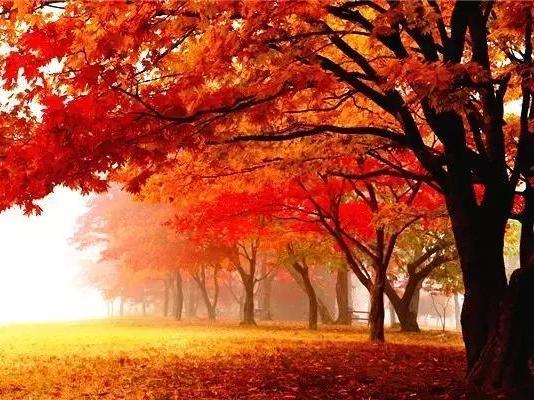 自行车秋天树叶粘贴画图片大全