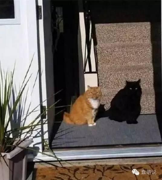 每日一蠢萌:为什么猫咪喜欢把桌子上的东西都推下去?-蠢萌说