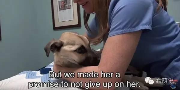 最残忍的虐待,狗狗被主人饿到皮包骨头不能进食-蠢萌说