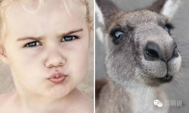15组宝宝和动物们的丰富表情神同步瞬间!-蠢萌说