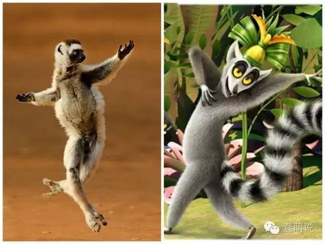 那些经典动画电影中动物们的生活原型!看到猫和老鼠我笑了!-蠢萌说