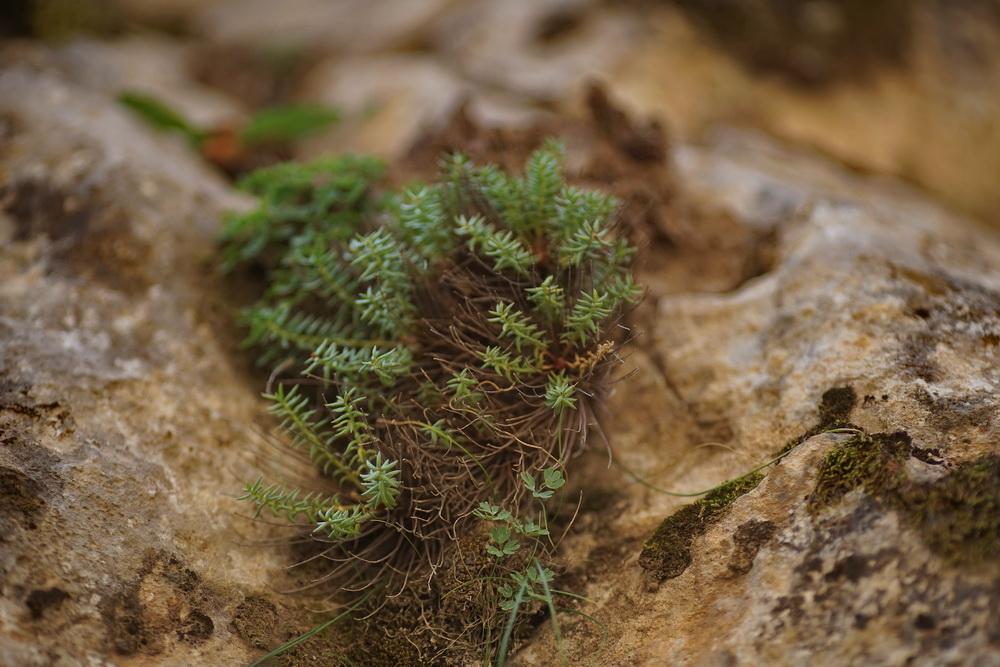 青藏高原,带你去峡谷寻找海洋化石...