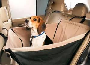 狗狗带给我们的开心和虐心,养过狗的人才会懂