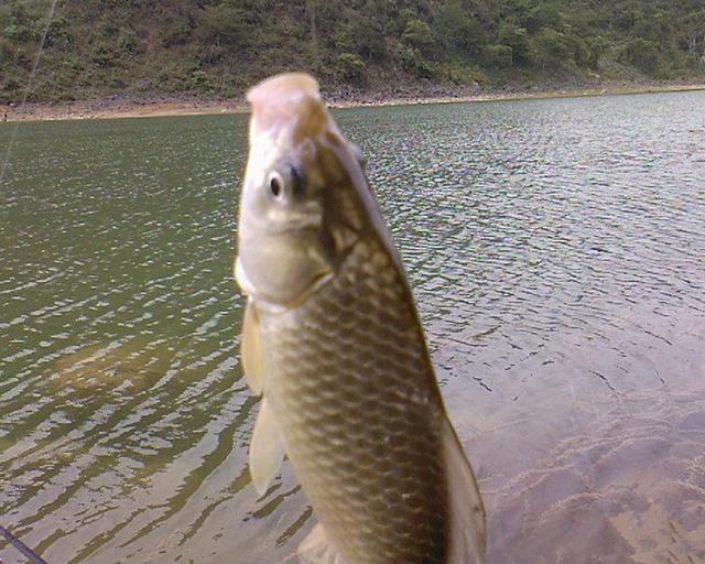 秋后钓鱼,不同时段不同钓法