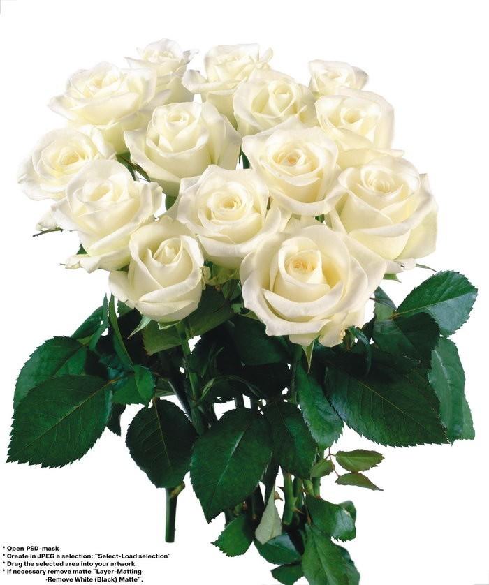 白色玫瑰花花束