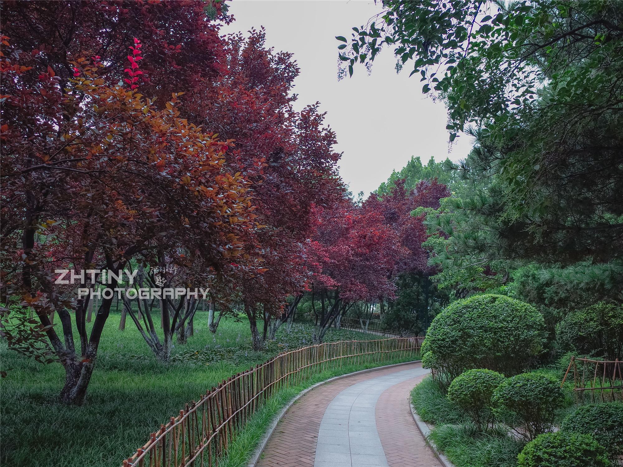 春去秋来,百花公园最后的夏天