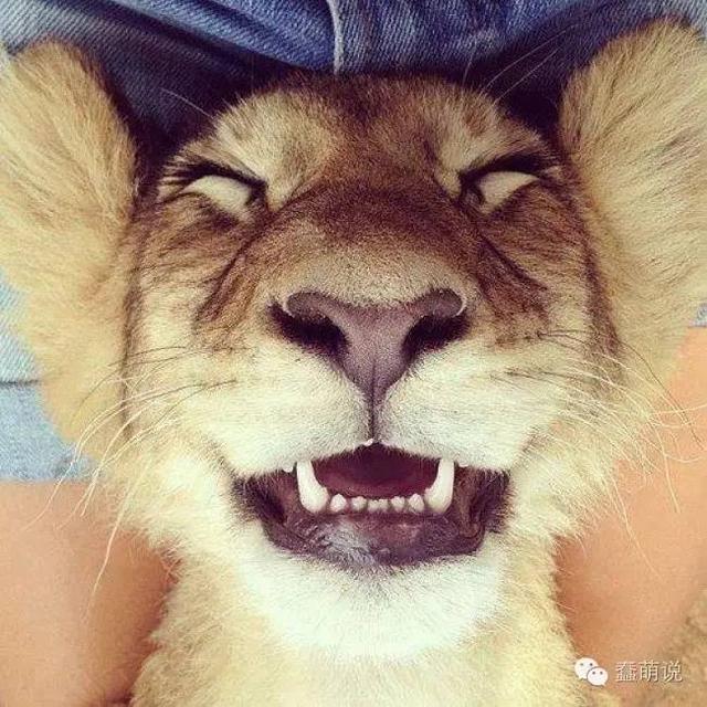 谁说动物不会笑?被这帮萌货彻底逗乐了!-蠢萌说