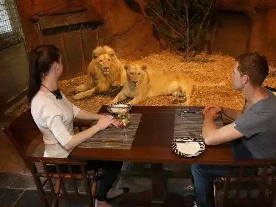 野生动物度假酒店,南昌宁你见过吗?