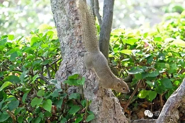 来偷吃食物的松鼠-一口气睡11张巴厘岛的床是种什么感受