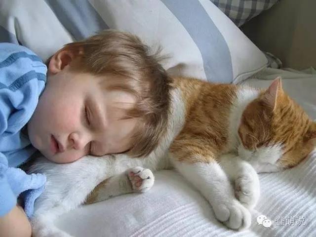 这就是为什么要给小朋友找一只猫,陪伴他一起成长!-蠢萌说