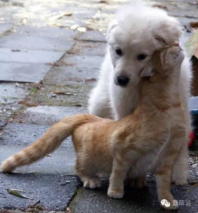 喵星人和汪星人之间的友谊,好起来的时候谁也挡不住!-蠢萌说
