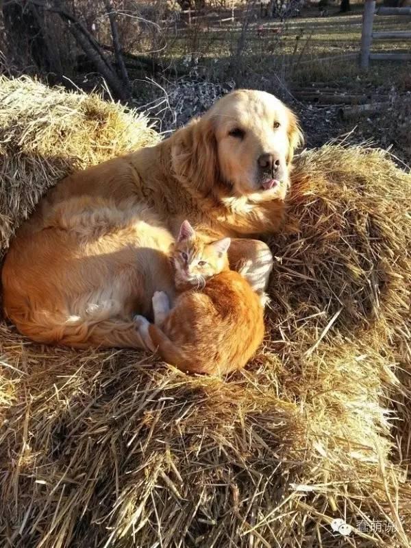 24张暖心的照片证明或许我该养一只狗了!-蠢萌说