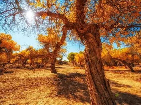 额济纳:看大漠、赏胡杨,拍电影大片中醉人的秋色