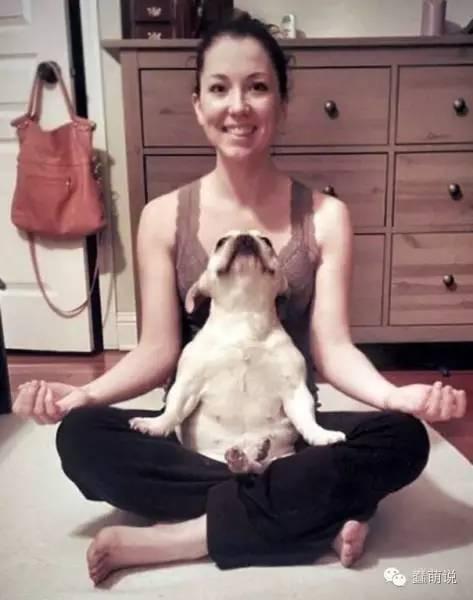 说出来你可能不信,这些喵汪星人都是来自神秘东方的瑜伽大师-蠢萌说