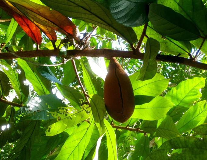 【巴西】亚马孙热带雨林探险