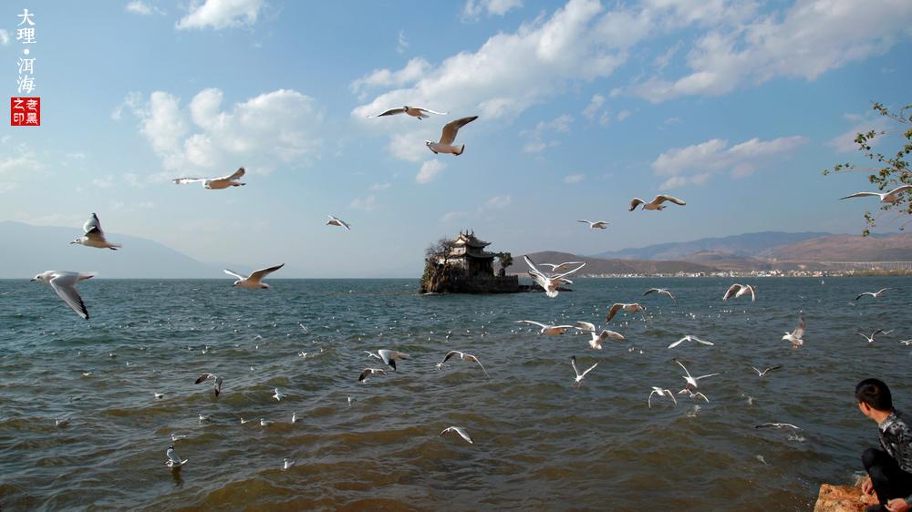 大理掠影  | 洱海不是海,美得就像海