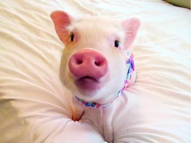 2、狗男与猪女婚配可以吗:年属狗男和属猪女相配吗