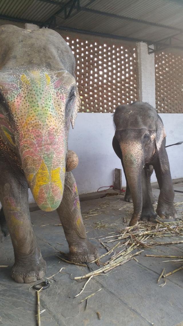 印度女孩带我们去她家看宠物,到了一看晕了