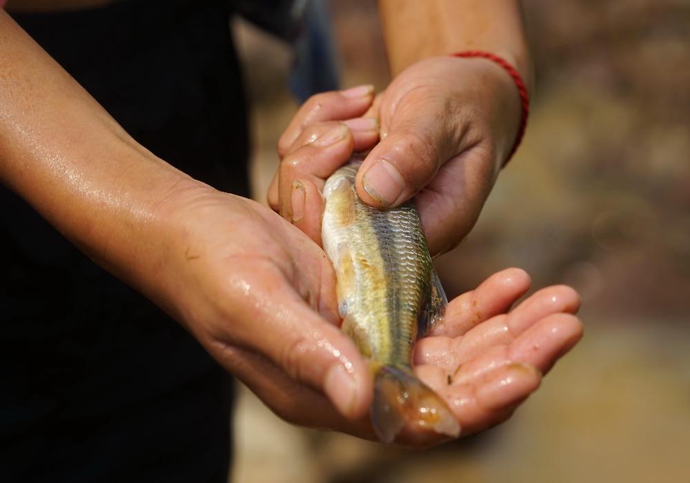 占里摸鱼  收获的不仅童趣还有晚餐