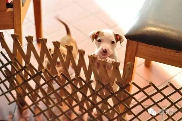 幼犬简直不要太可爱太萌,但即便颜值高生活也十分不如意啊!-蠢萌说