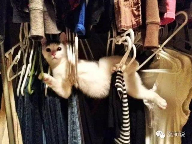 注意!家里面的猫如果不见了,可以在这些地方找找看-蠢萌说