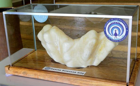 世界上最大颗的珍珠长什么样?按斤算!